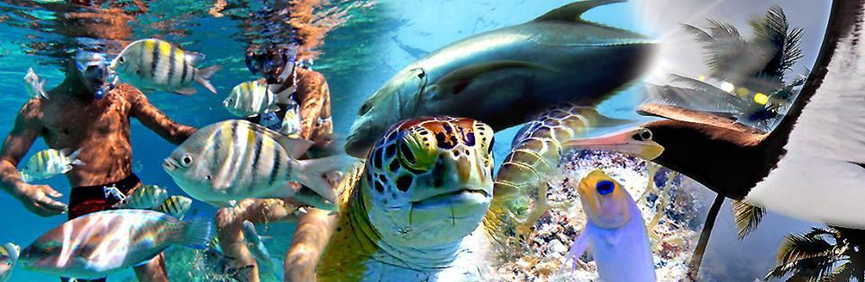 Virgin Islands under water snorkeling sailing fun