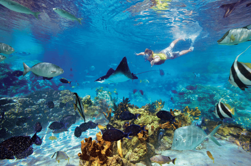 shore-excursions_snorkeling